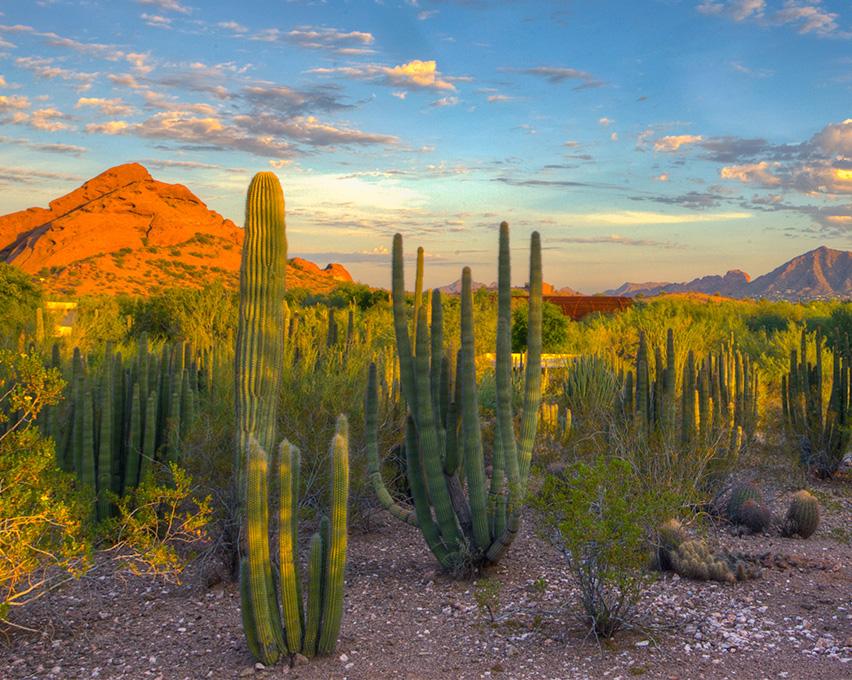desert botanical garden the saguaro initiative psstudios - Desert Botanical Garden